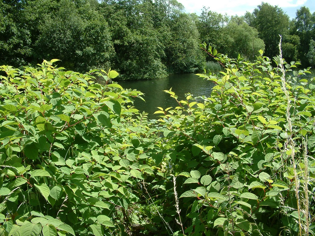 Invasive Weed Control Group shares decades of experience with new video