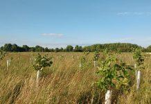 new woodlands