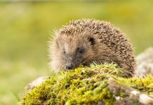 protect british wildlife, developers,