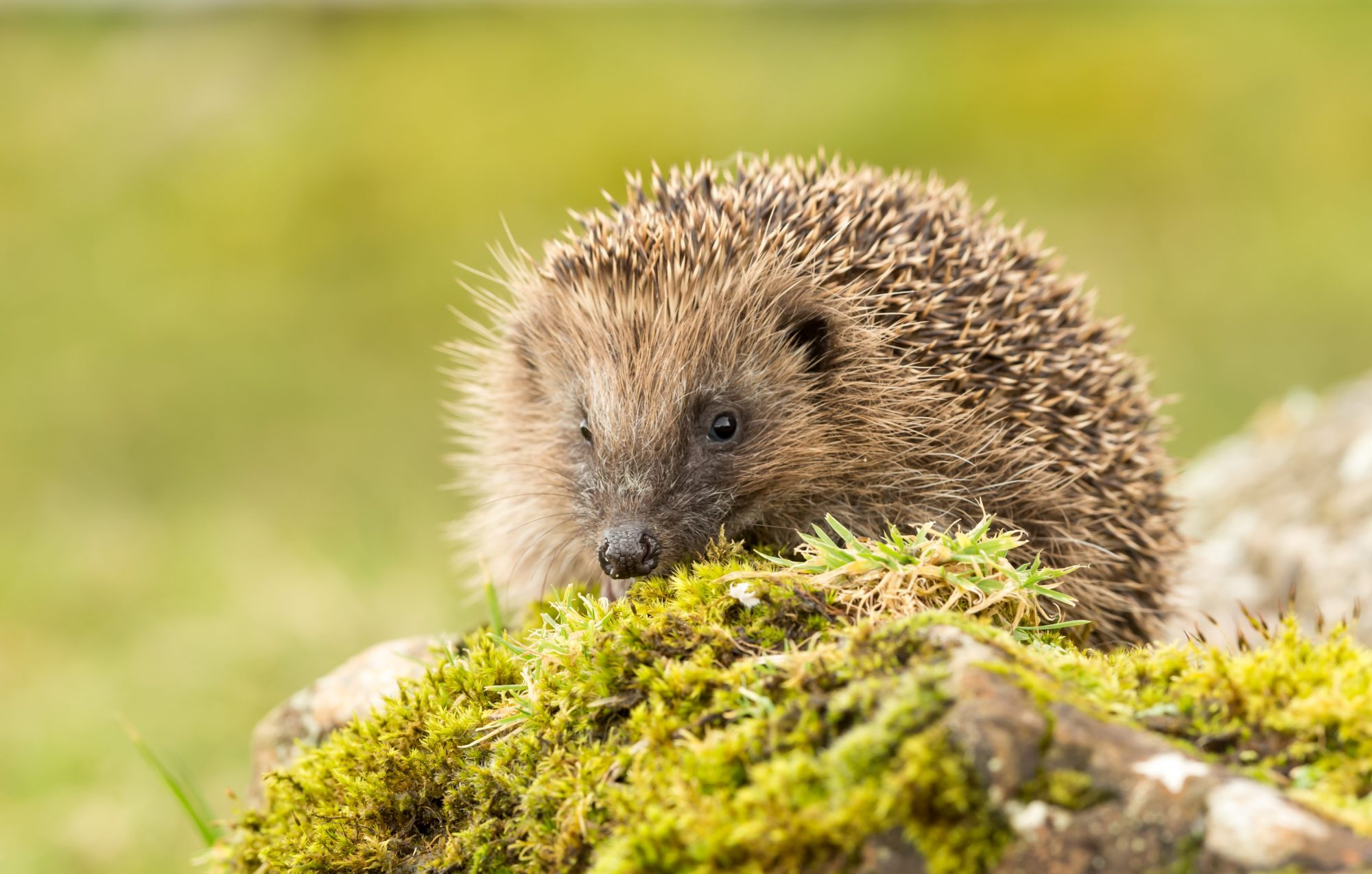 protect british wildlife, developers,
