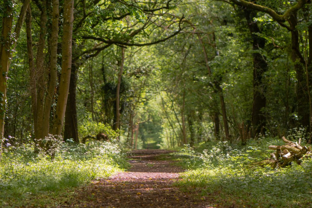 Ancient woodland, HS2,