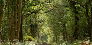 Ancient woodland, HS2,