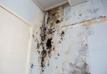 investigating damp,