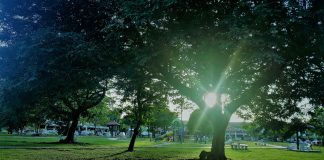 green spaces, pocket parks,