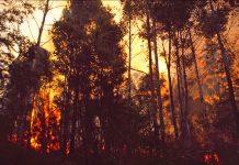 Common data environment, Bushfire Recovery,