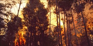 Common data environment, Bushfire Recovery,