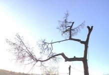 tree maintenance, prune, tree,