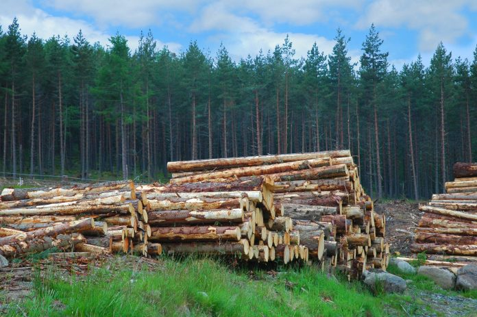 home-grown timber