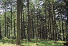 net carbon negative, Wood product,